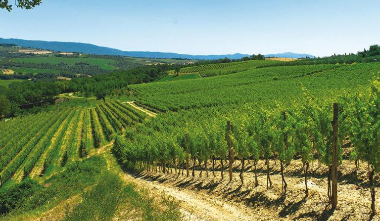 Nasce la Consulta Nazionale…del vino italiano
