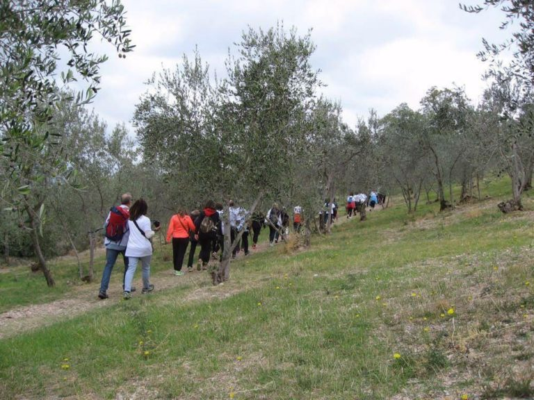 'Camminata tra gli olivi': migliaia i partecipanti in tutta Italia