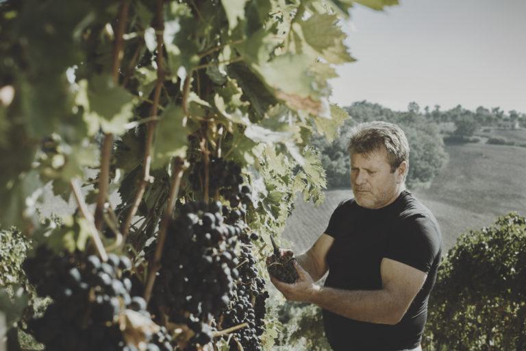 Tenuta Oderisio: dalla passione e dalla cura in vigna, la sincerità e l'alta qualità in bottiglia