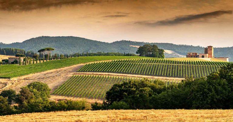 Monterosola, brezza regolare per l'energia delle vigne